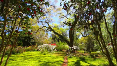 Louisiana-Rosedown-Plantation-Gardens-Oak-Trees-And-Azaleas