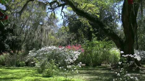 Louisiana-Rosedown-Plantation-Gardens-With-Azaleas