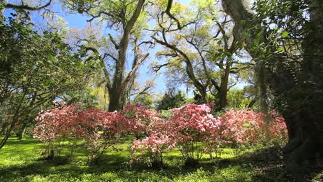 Louisiana-Rosedown-Plantation-Gardens-With-Blooming-Azaleas