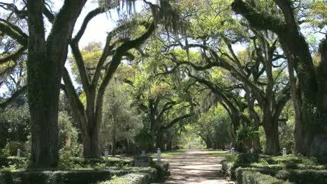 Louisiana-Rosedown-Plantation-Looking-Down-Oak-Alley