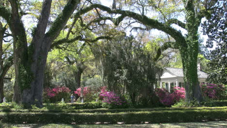 Louisiana-Rosedown-Gardens-With-Live-Oaks