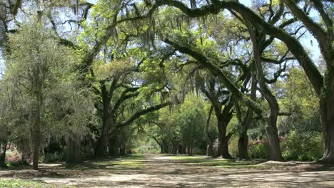 Louisiana-An-Oak-Alley-In-The-Rosedown-Plantation-Gardens