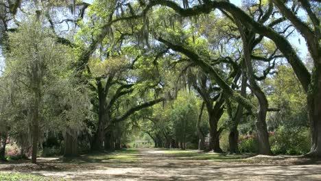 Louisiana-An-Oak-Alley-In-The-Rosedown-Plantation-Gardens