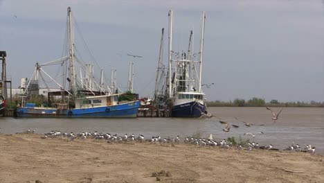 Louisiana-Shrimp-Boats-And-Birds-Flying
