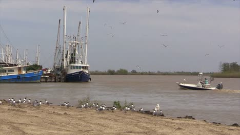 Louisiana-Garnelenboote-Mit-Kleinen-Bootsdrehungen-Und-Vögeln