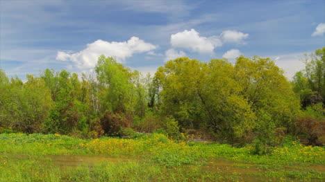 Louisiana-Vegetation-Between-Levee-And-River