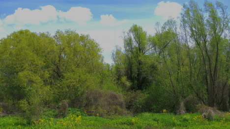 Louisiana-View-From-Levee