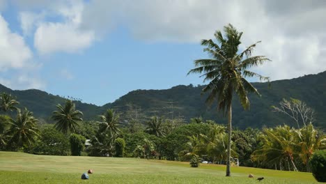 American-Samoa-Golf-Course-And-Palm