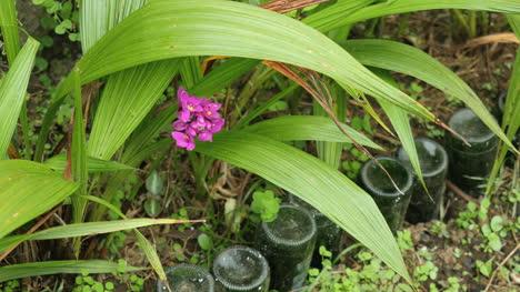 American-Samoa-Red-Flower
