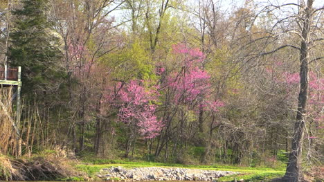 Arkansas-Zooms-From-Woods-To-Mammoth-Spring