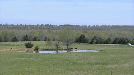 Arkansas-Pond-With-Cows