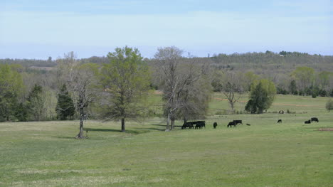 Arkansas-View-With-Cows