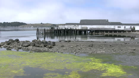 California-Bodega-Bay-Pier-And-Green-Scum