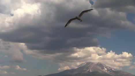 California-Mt-Shasta-Under-Clouds-Bird-Flies-Toward-Camera-Slowed