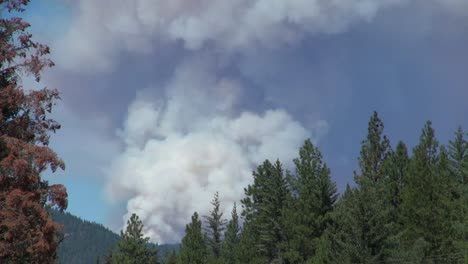 California-Smoke-Above-Trees