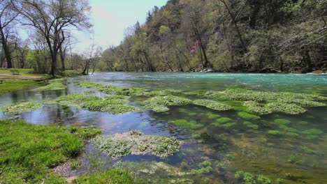 Missouri-Current-River-And-Floating-Vegetation-At-Big-Spring