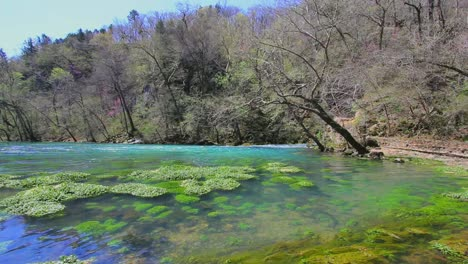 Missouri-Current-River-And-Water-Weeds-At-Big-Spring