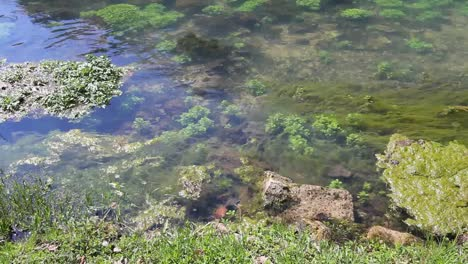 Missouri-Current-River-Vegetation-In-Clear-Water-At-Big-Spring