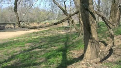 Missouri-A-Twisted-Vine-Grows-Around-A-Tree