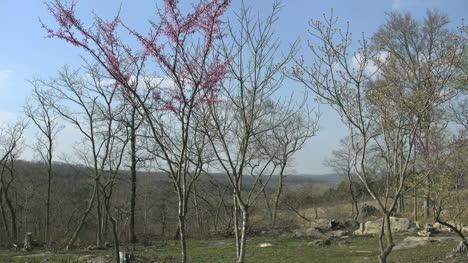 Missouri-Trees-And-Redbud