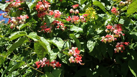 Oahu-Red-And-Pink-Flowers