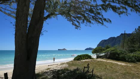 Oahu-Waimanalo-Beach-With-Man-In-The-Surf-Tree-Frame