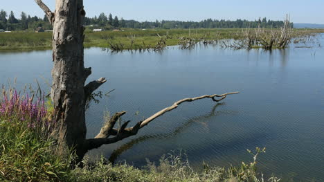 Oregon-Columbia-River-Backwater-Branch-In-Pond