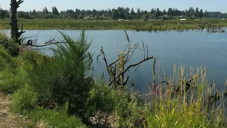 Oregon-Columbia-River-Backwater-Edge-Of-Pond