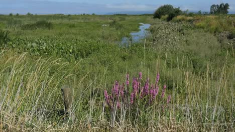 Oregon-Columbia-River-Backwater-Marshes