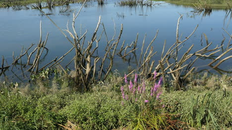 Oregon-Columbia-River-Backwater-Pond-And-Weeds