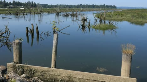 Oregon-Columbia-River-Backwater-With-Posts