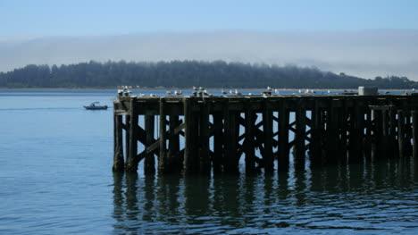 Oregon-Tillamook-Bay-Gulls-Sitting-On-Pier