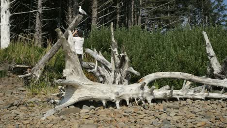 Oregon-Coast-Dead-Tree-With-Boy-&-Seagull