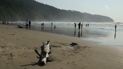Oregon-Coast-With-Log-And-People