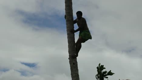 Samoa-Climbing-Down-Coconut-Palm