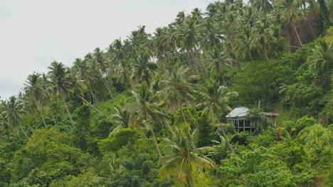 Samoa-House-On-Hill-With-Palm-Trees