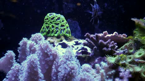 Undersea-Life-With-Anemones-And-Sponges