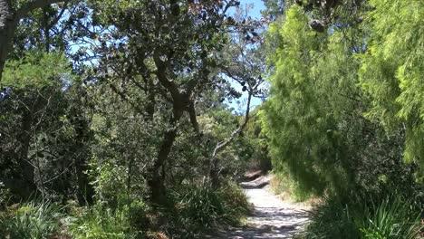 Australia-Banksia-Woodland-Path