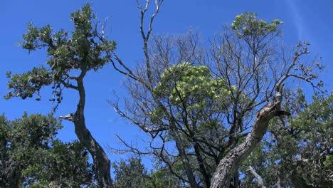 Australia-Banksia-Woods-And-Vivid-Blue-Sky