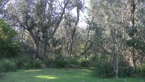Australia-Durras-Woodland