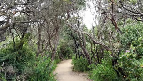 Australia-Mornington-Peninsula-Path