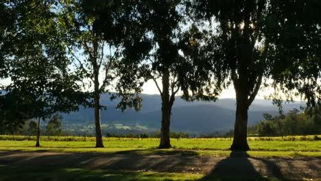 Australia-Mt-Bellevue-Backlit-Trees