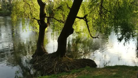 Australia-Murray-River-At-Albury-Willow