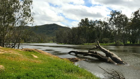 Australia-Murray-River-With-Log