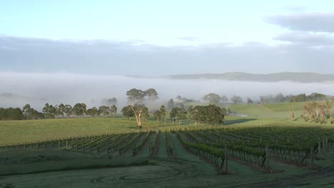 Australia-Outlet-Hill-Vineyard-View-Zoom-In-Past-Vineyard