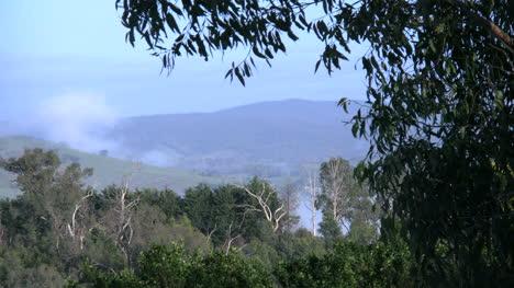 Australia-Outlook-Hill-Gum-Leaves-Frame-View