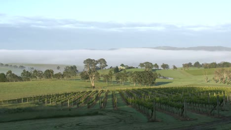 Australia-Outlook-Hill-Sun-Creeping-Up-Vineyard