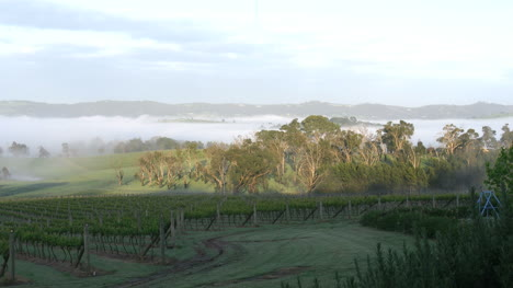 Australia-Outlook-Hill-Trees-And-Mist-Zoom-In-With-Bird