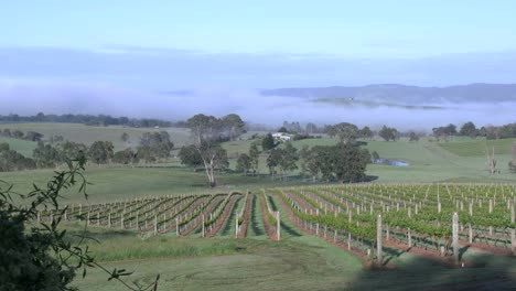Australia-Outlook-Hill-Vineyard-View-With-Valley-Fog