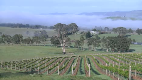 Australia-Outlook-Hill-Zooms-From-Vineyard-View